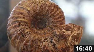 西蝦夷ここ路旅「化石旅」