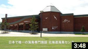 日本で唯一の海鳥専門施設 北海道海鳥センター