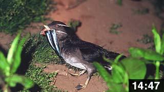 西蝦夷ここ路旅「鳥獣旅」