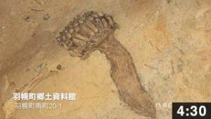 西蝦夷ここ路旅「化石に触れるルート」
