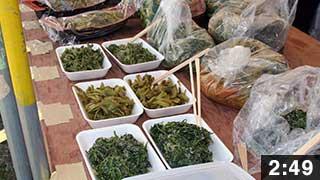 富士見ケ丘公園開き山菜まつり