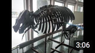 北海道るもい地域ここ路旅「化石に触れるルート」